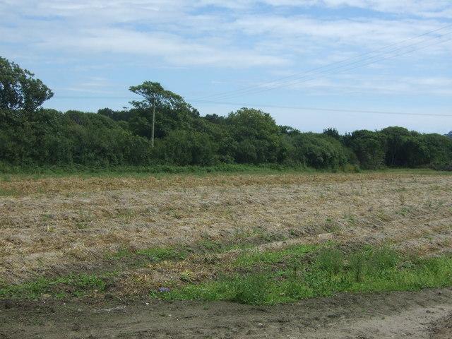 Potato field near Varfell Farm
