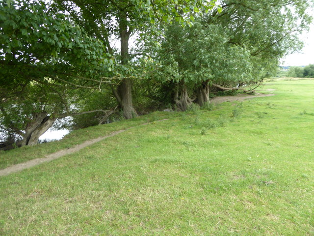 Bank of willow trees on the River Severn near Berriew