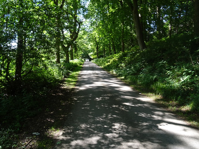 Woodland road to Chirk Castle