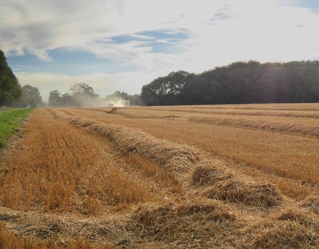 Harvest-time at Ashampstead (1)
