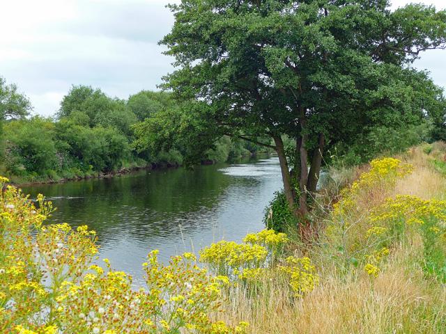 River Wye near Foy (3)