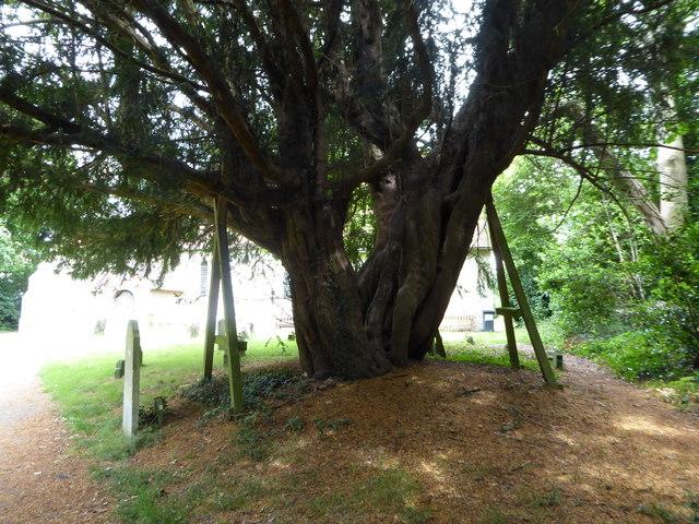 St. Mary, Ninfield: churchyard (b)
