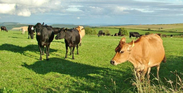 Dairy Farming on Reeves Hill, Knighton, Powys.