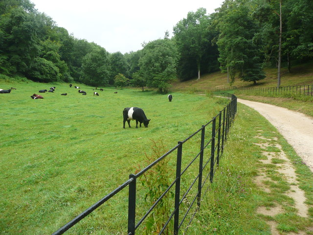 Driveway, Woodchester Park, and cattle