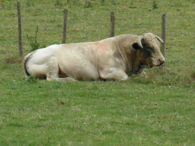Bull dozing beside the Montgomeryshire Canal