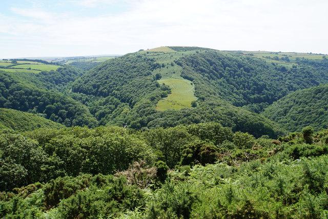 Hillside above Horner's Neck Wood