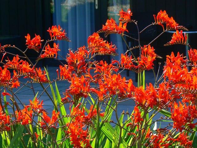 Flowers, Garden Lodge garden, Bodelwyddan Castle