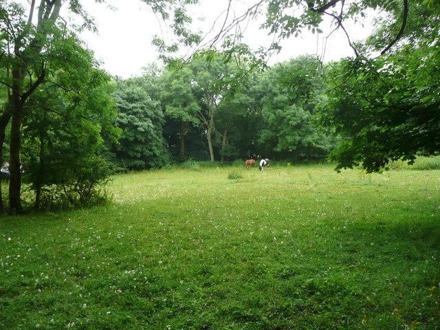 View from Standish Wood, Randwick