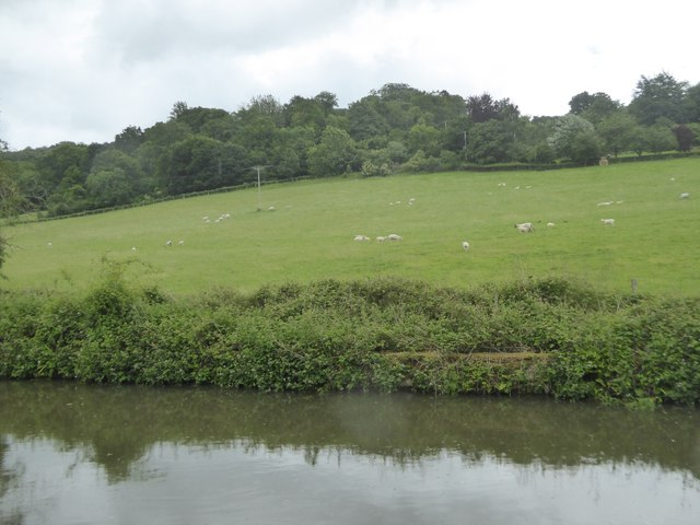 Canal and field by Crockford Farm
