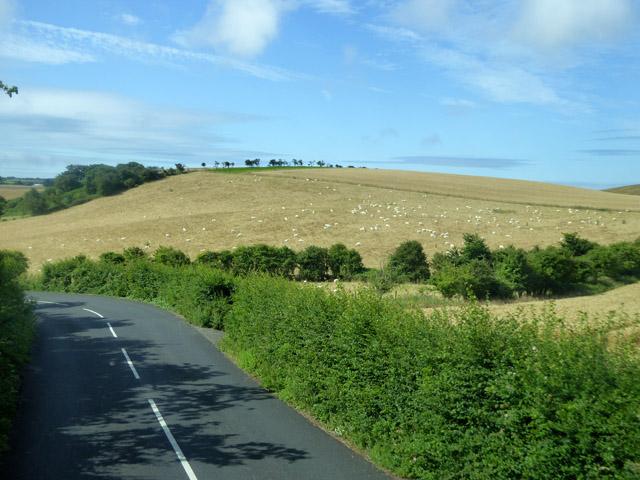 Field with sheep near West Billingham Farm