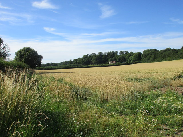 View towards Kirklington Hill