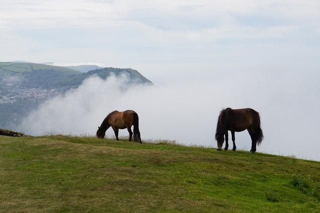 Exmoor ponies above sea mist
