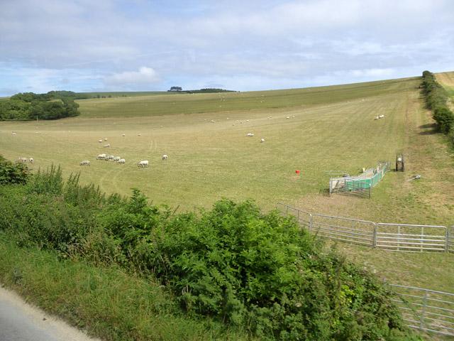 Sheep farming near Rowborough Farm
