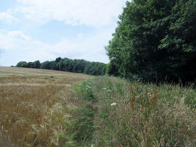 Bridleway adjacent to cereal crops