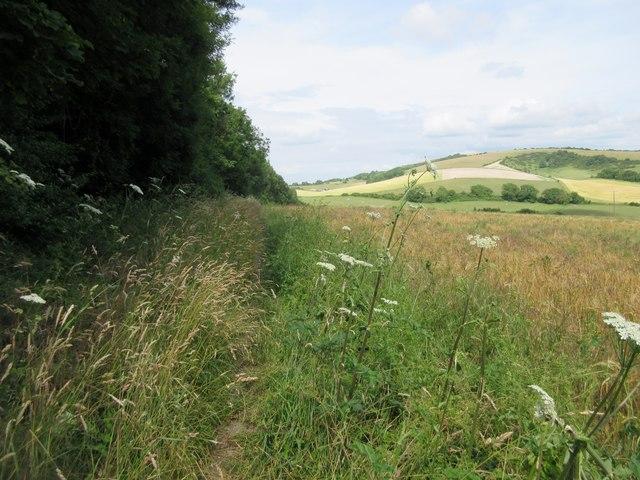 Bridleway along grass margin