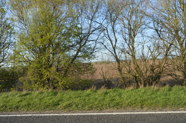 Trees by the A259