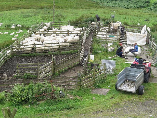 Break from sheep shearing, Lower Gylen, Kerrera
