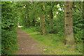 SP2779 : Tilehill Wood by Stephen McKay
