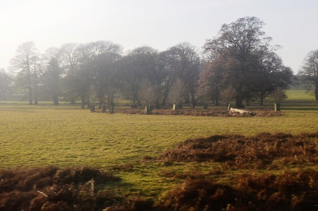Powderham Park