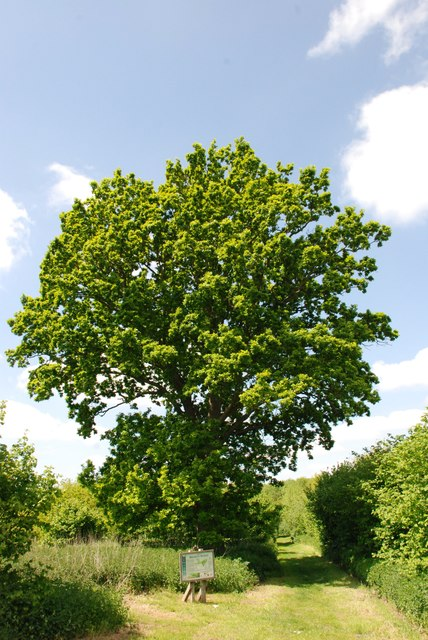 Brakey Wood Hoxne Suffolk