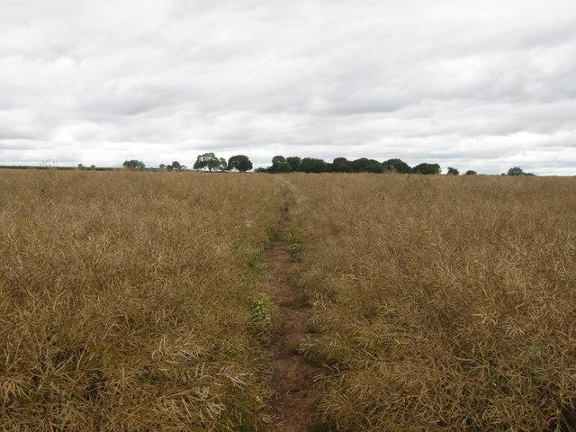 Bridleway north of Little Leyfields