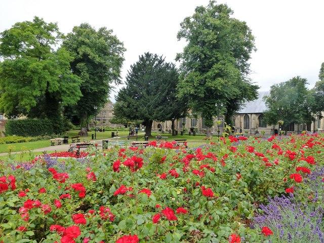 Roses in St Peter's & St Paul's Church gardens, Wisbech
