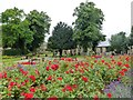 TF4609 : Roses in St Peter's & St Paul's Church gardens, Wisbech by Richard Humphrey