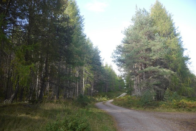 Logging road, Glen Feshie