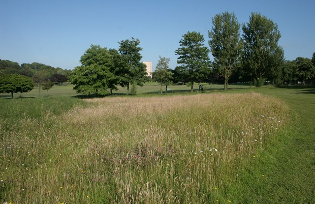 The Bee Meadow, Bellahouston Park