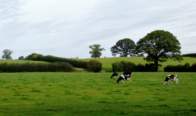 Pasture north-west of Marbury in Cheshire