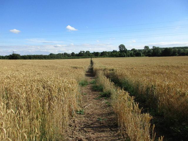 Footpath to Maythorne