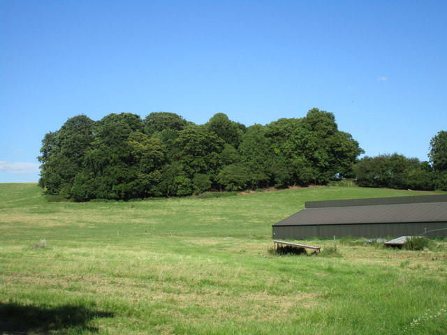 Plantation near Meadow Farm