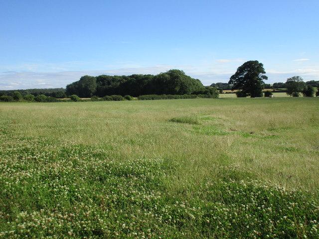 View towards a plantation near Kirklington