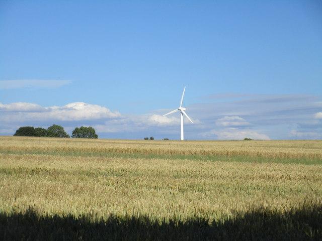Wheatfield and wind turbine near Hockerton