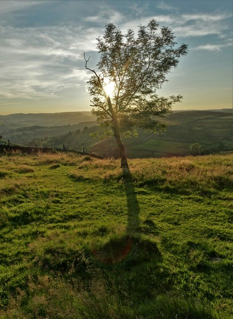 Small tree on the edge of Hathersage Moor