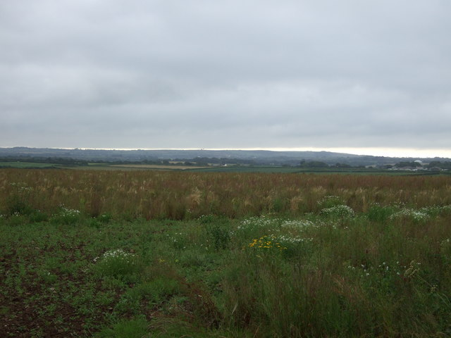 Crop field near Mably Farm
