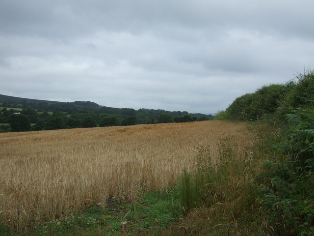 Cereal crop, Ruthdower
