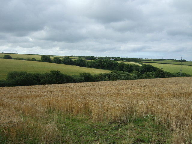 Cereal crop off the A3083