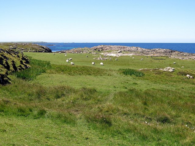 Sheep grazing near Ringing Stone