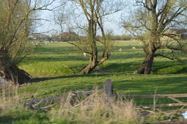 Trees by a ditch