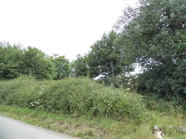 Hedgerow by Gaddesden Lane