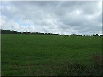 SW6923 : Grazing near Burncoose by JThomas