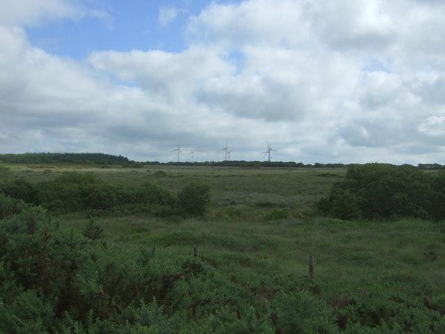 Heathland, Goonhilly Downs
