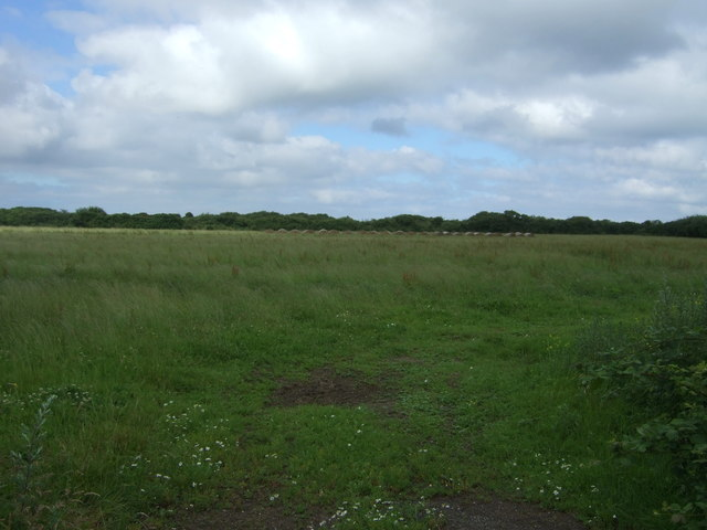 Grassland near Penhale