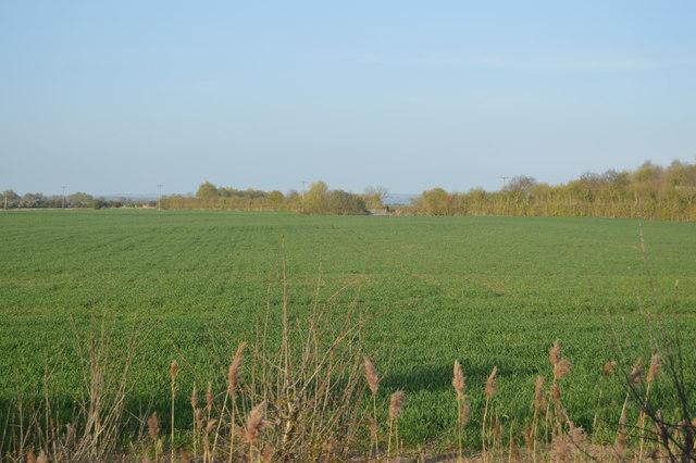 Field near Brenzett