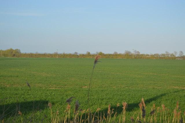 Field, Brenzett