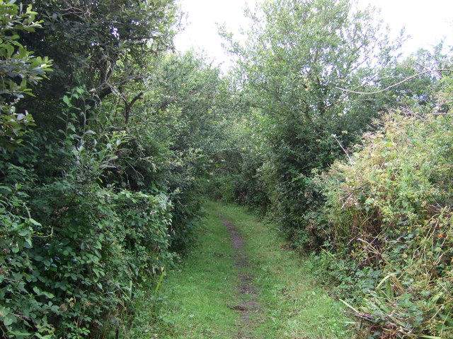 Bridleway towards Lizard Downs