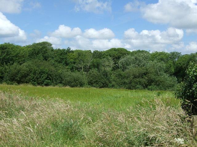 Farmland and woodland, Ruan Major