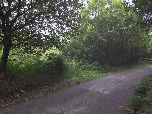 Road through Woodland