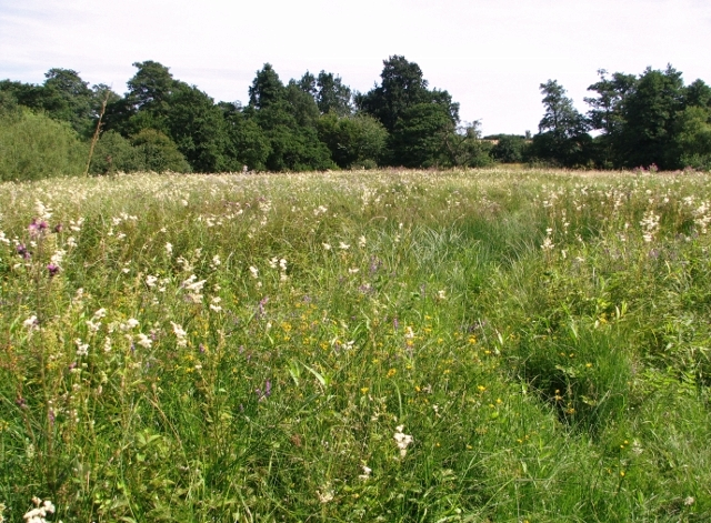 The Beck Meadow in mid-July